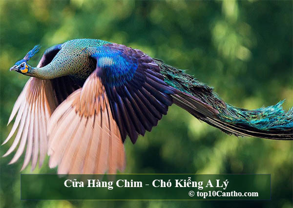 Top 10 Cửa hàng chim cảnh đa chủng loại tại Ninh Kiều Cần Thơ