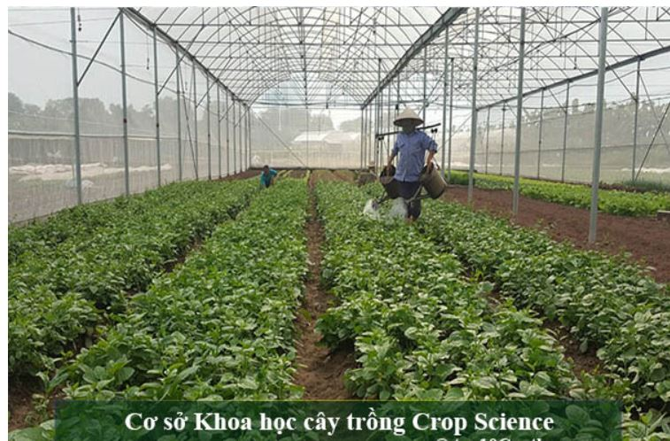 Top 10 Trung tâm cây giống uy tín nhất tại Ninh Kiều Cần Thơ